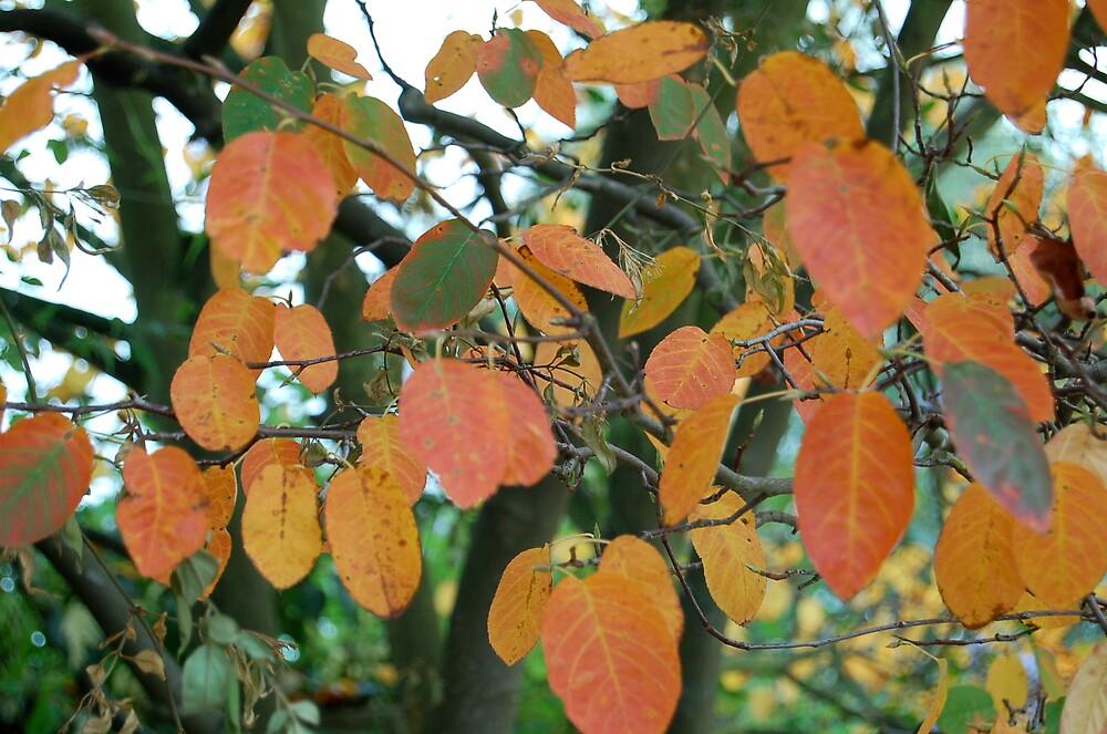Blenheim autumn by wintonking