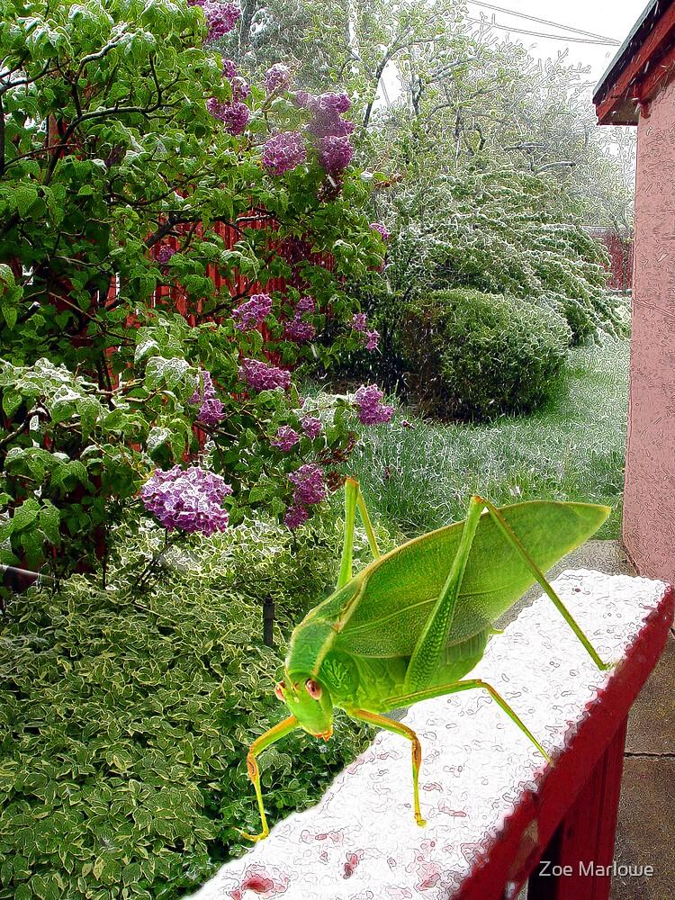 My Garden Gate by Zoe Marlowe
