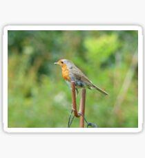 Robin I Sticker