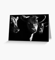 Cow With Calves #2 Greeting Card