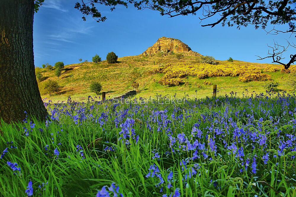 Bluebells At Roseberry Topping by Stewart Laker