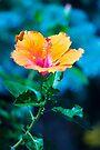 Orange flower by John Velocci