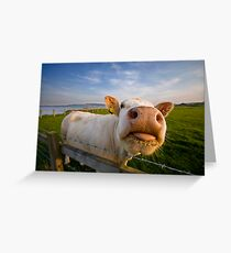 Cheeky Cow Greeting Card