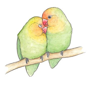 Love Bird couple watercolour illustration art by sillybadger