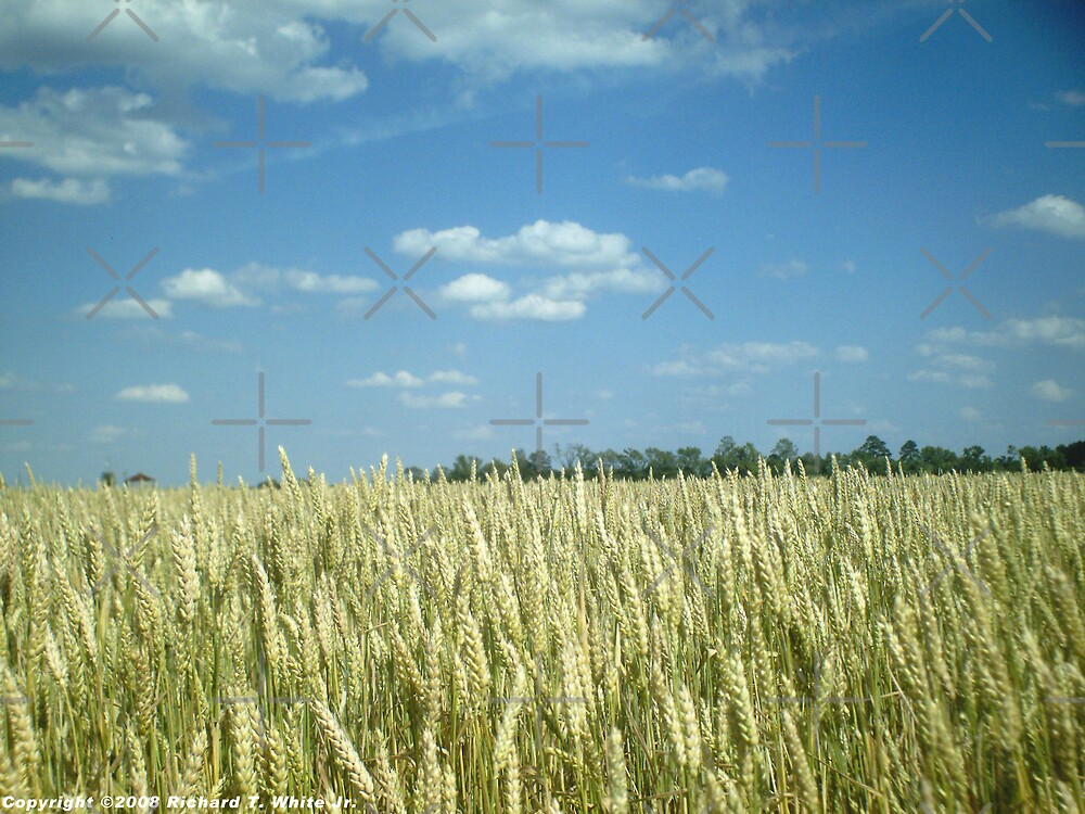 Wheat Field - 2 by SEspider