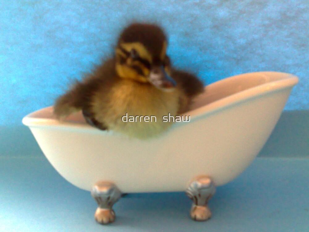 ducks bath time by darren  shaw