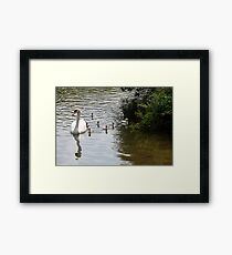 New Born. Framed Print