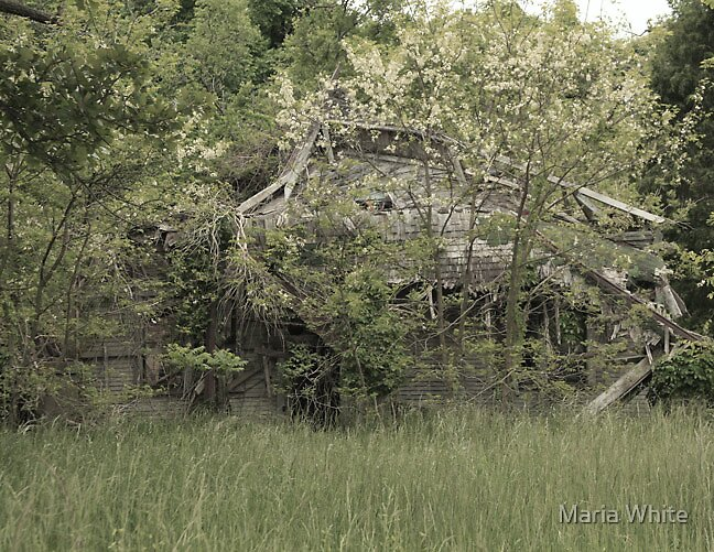 Dilapidated Old House by Maria White