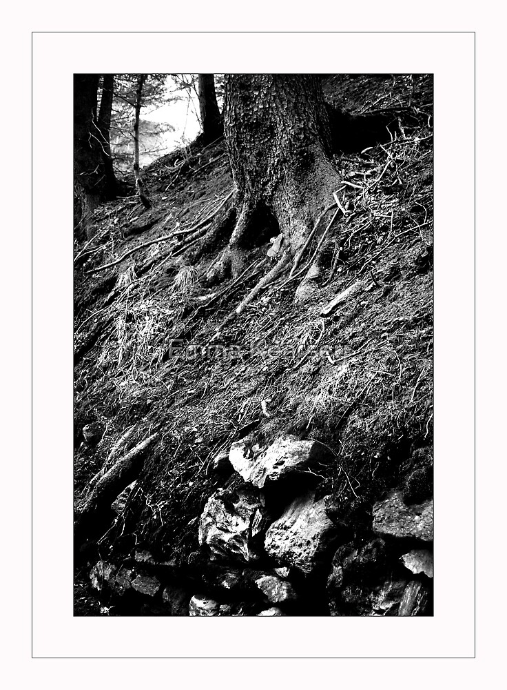 Tree roots by Emma Kearsey