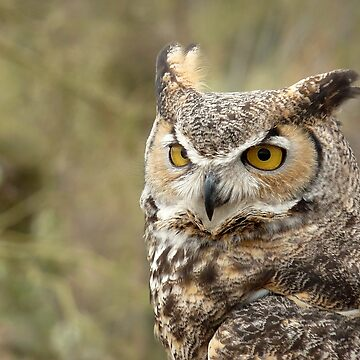 The Owl by GVAZDesigns