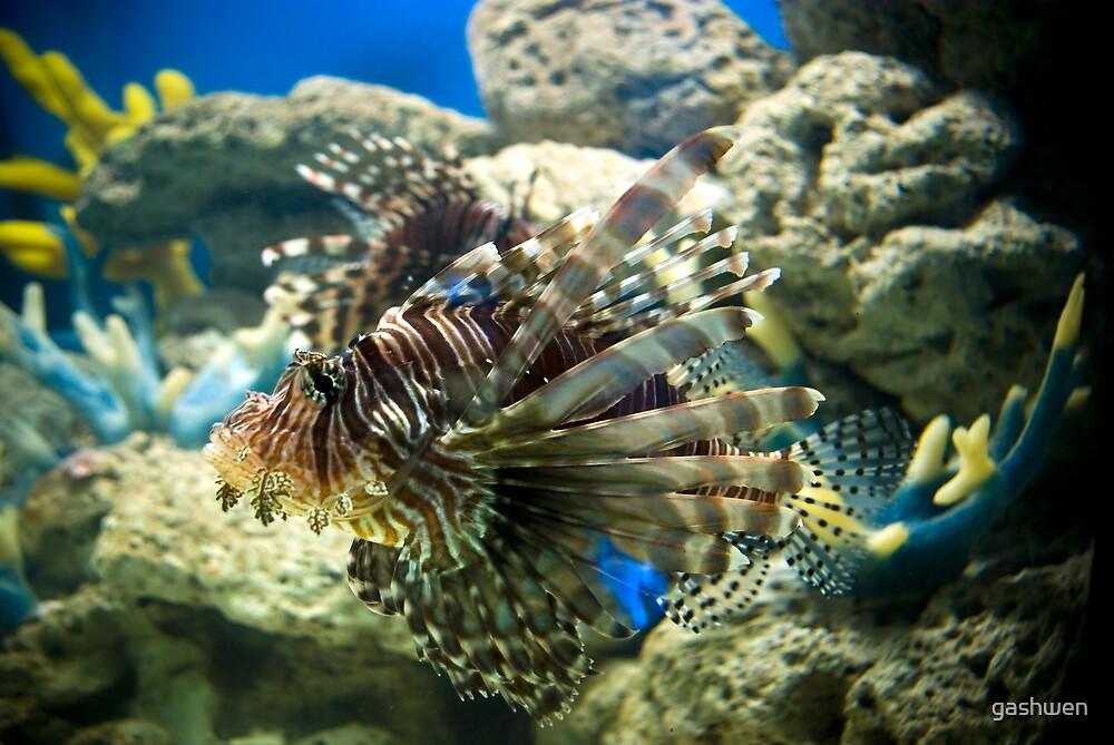 scorpion fish by gashwen