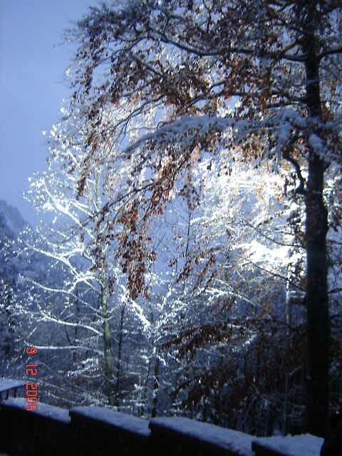 Shadow of a Tree - Neuschwanstein Castle by MissLizzy