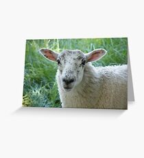 Sheep (Kendal) Greeting Card