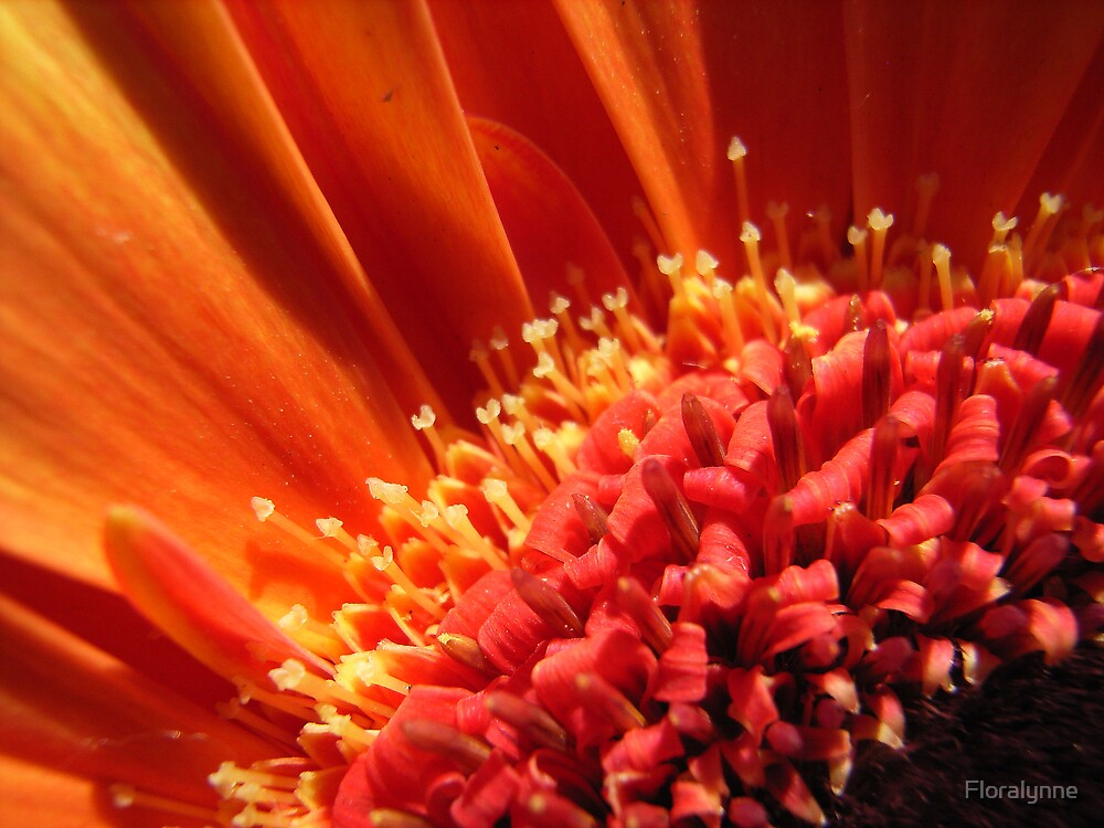 sunbeam by Floralynne