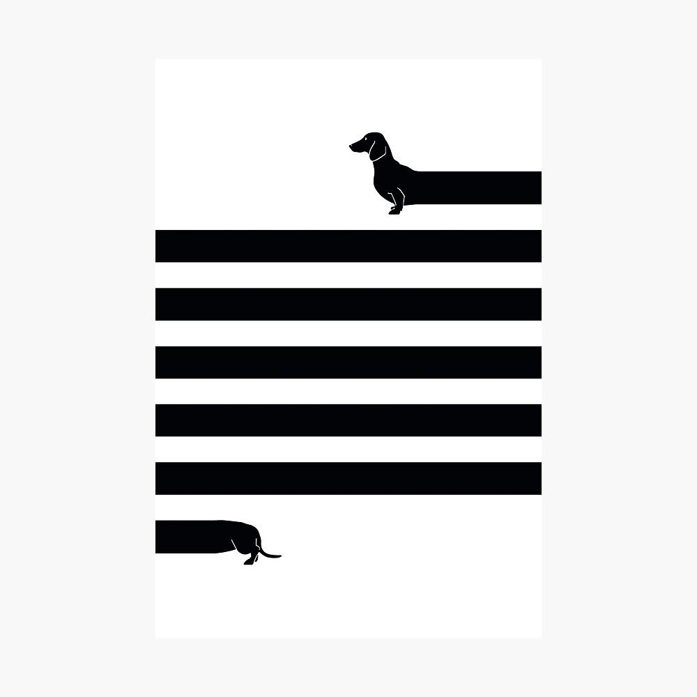 (Sehr) Langer Hund Fotodruck