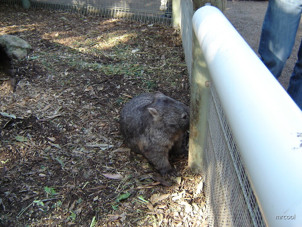 WALLY THE WOMBAT  by mrcool