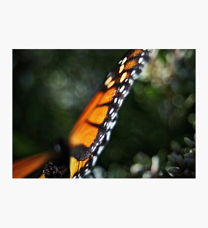 Butterfly Bokeh Photographic Print