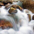 Jungle Stream by Steven  Siow