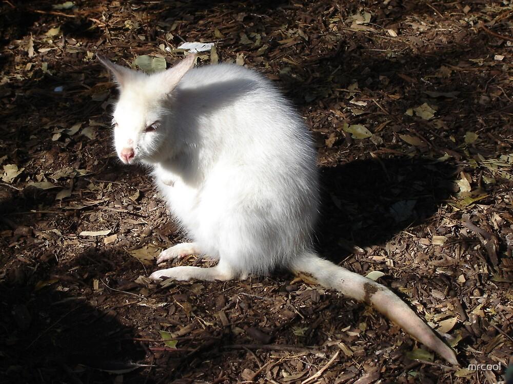 WHITE BILBY by mrcool