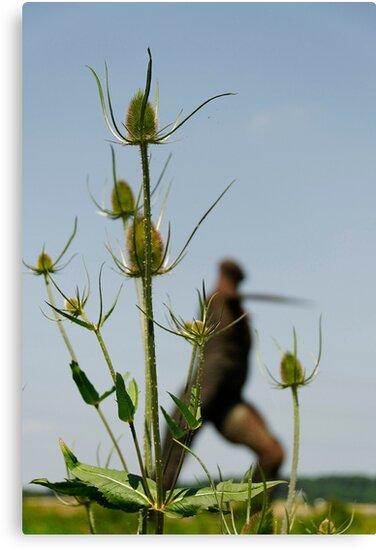 The willow man of Somerset, Bridgwater, UK by David Carton