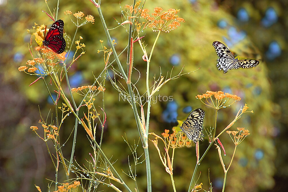 Raindrops and  Butterflies by Neophytos
