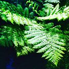 Fern of the Valley by silvanarama