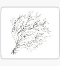 Coral/ Sea Life Sticker