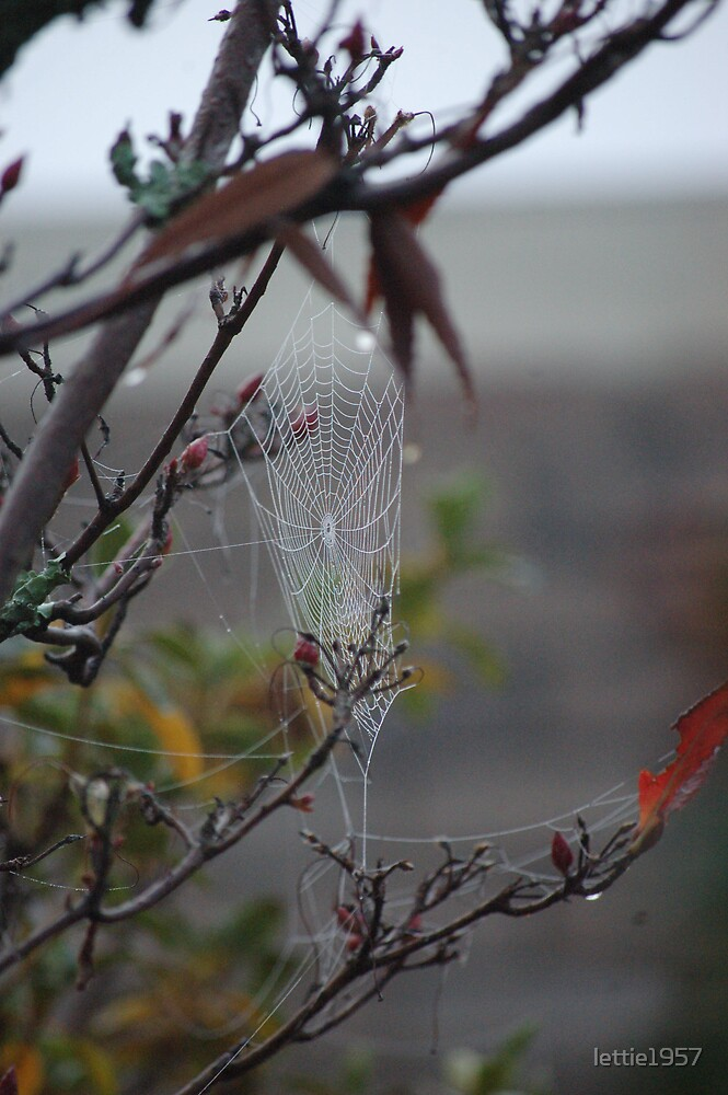 Web in the Mist by lettie1957