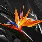 Flower - A Bird In Paradise   by HHPhotographyFL
