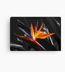 Flower - A Bird In Paradise   Canvas Print
