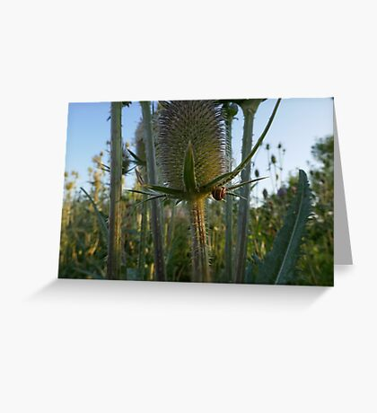 Teasel With a Snail Greeting Card