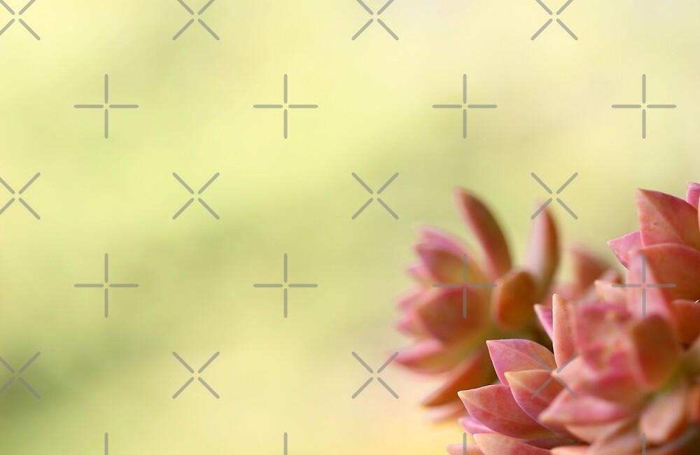 Autumn Wish by Cosmic Fox  Photography
