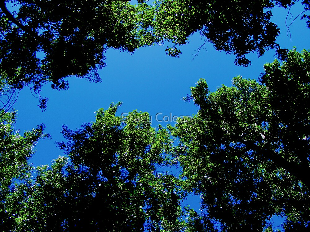 Looking Up by Stacy Colean