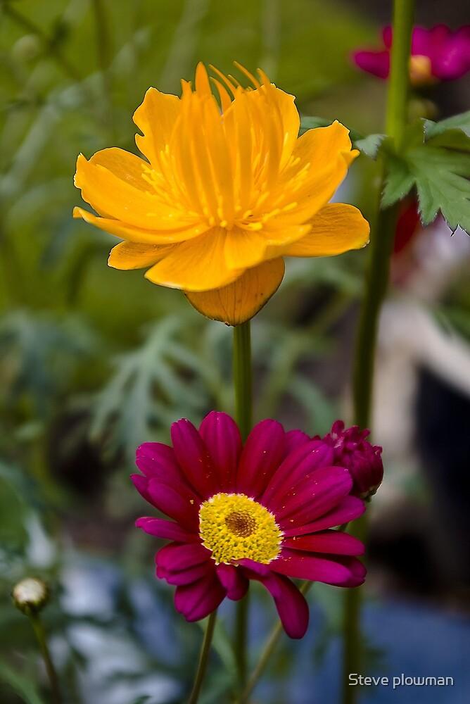 Colourful friends by Steve plowman