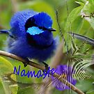 Namaste Blue Wren by adbetron