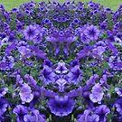 Purple Petunias by KazM