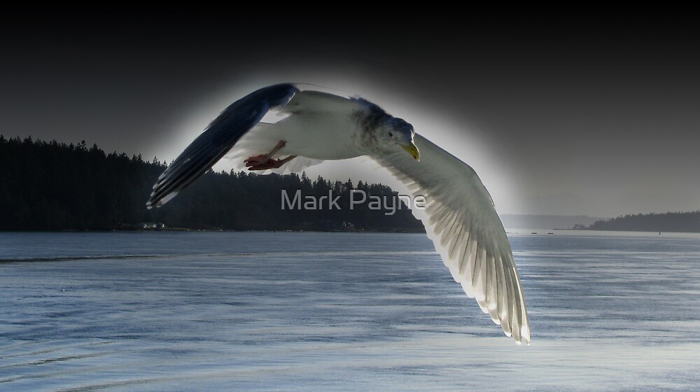 Soaring Seagull by Mark Payne