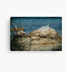 Seagull on a Rock Canvas Print