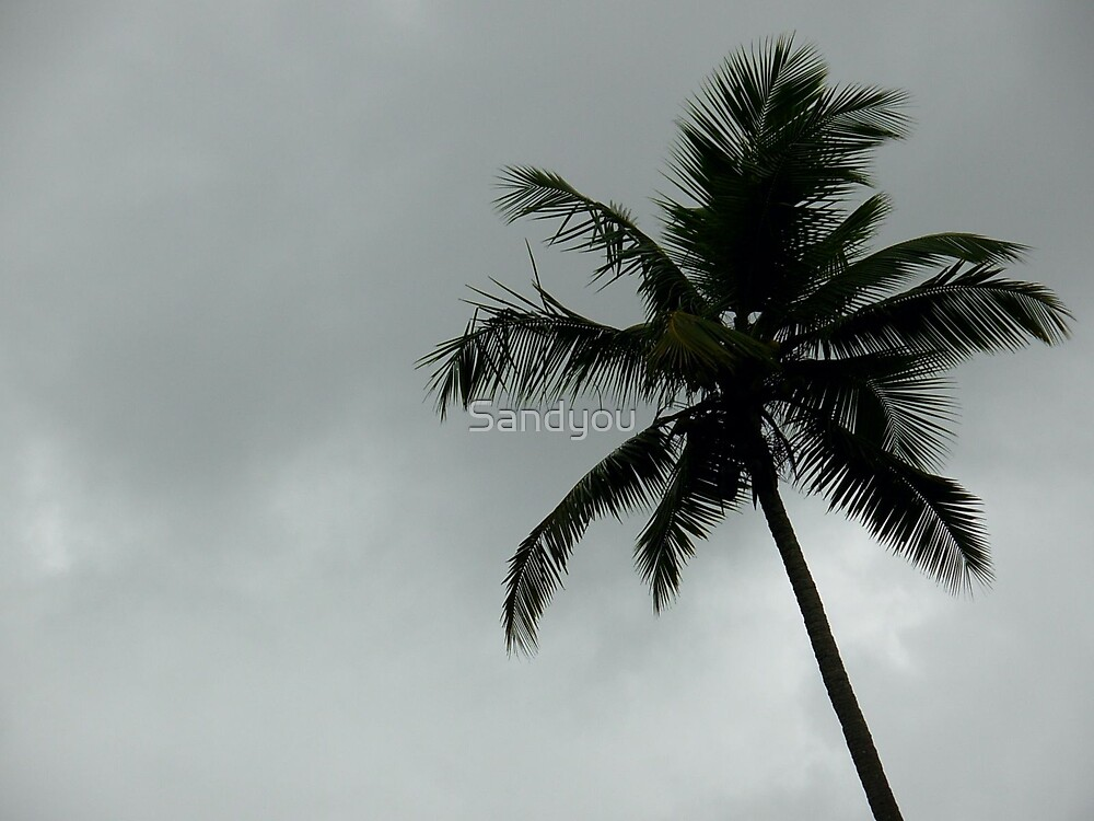Awesome view of coconut tree by Sandyou