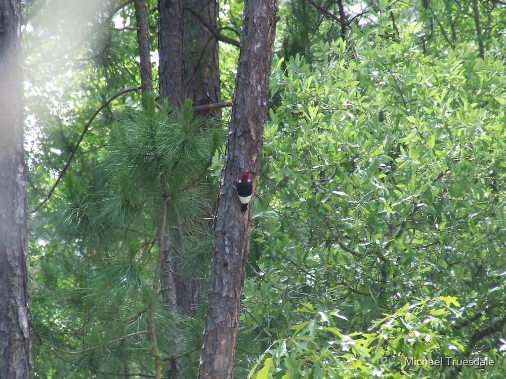 Red Headed Woodpecker by Michael Truesdale