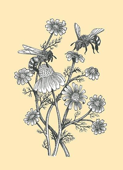 Bienen und Kamille auf Honig Hintergrund von EllenLambrichts