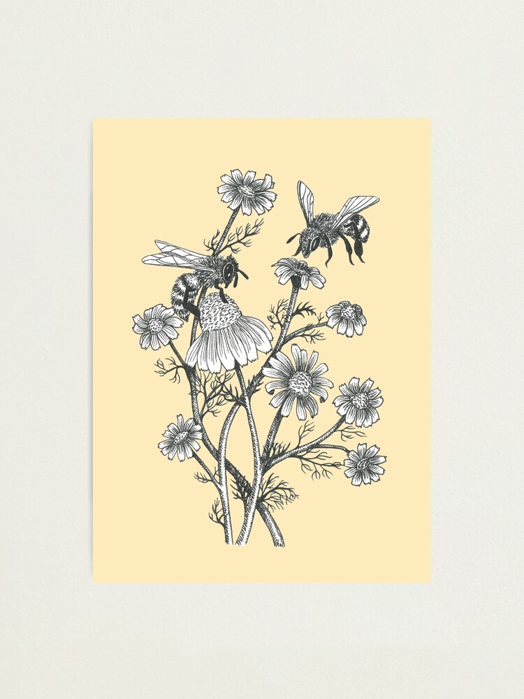 Alternate view of bees and chamomile on honey background  Photographic Print