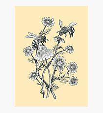 Bienen und Kamille auf Honig Hintergrund Fotodruck