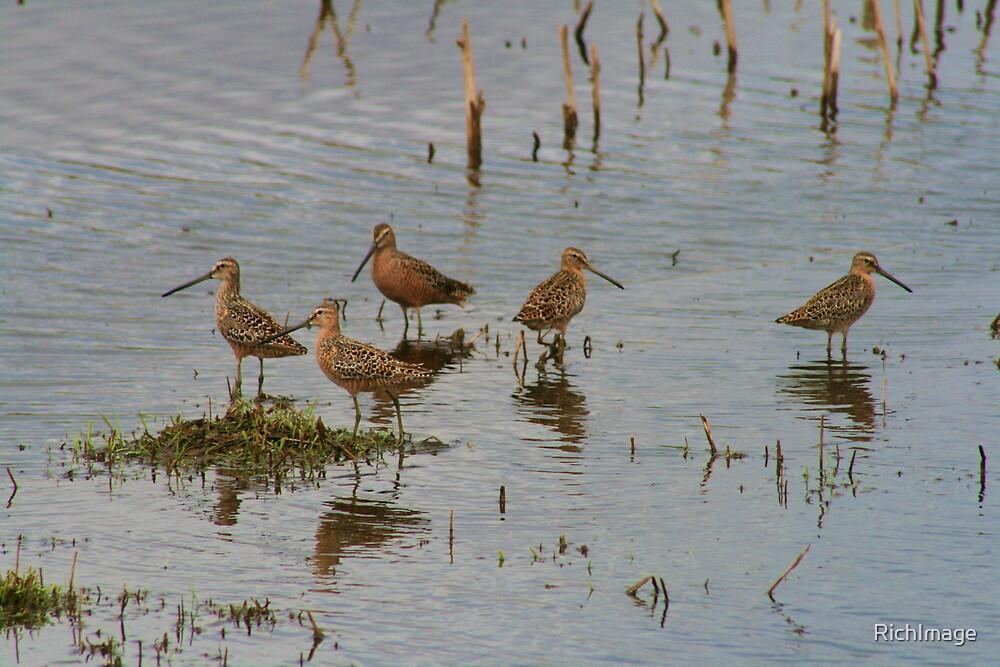 shorebirds... by RichImage
