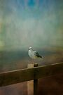 Seagull on a Fence by Elaine Teague
