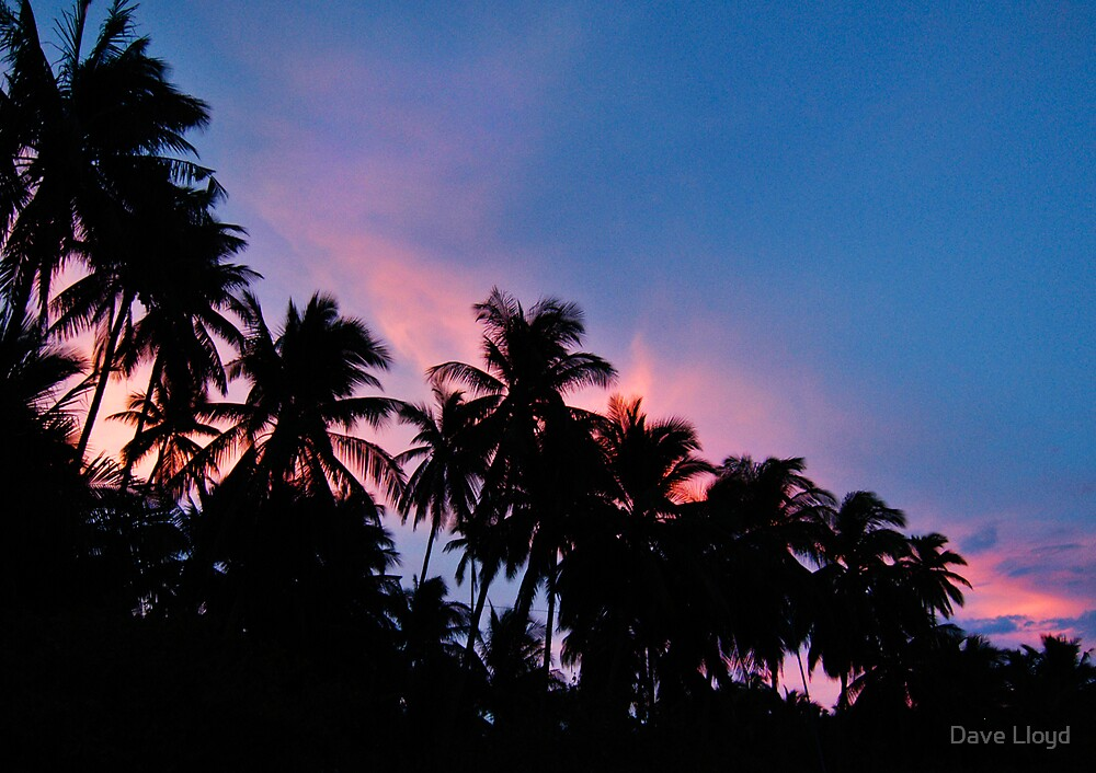 Fire Palms by Dave Lloyd