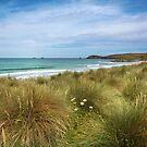 Sand dunes and marram grass Constantine bay - Cornwall by eddiej