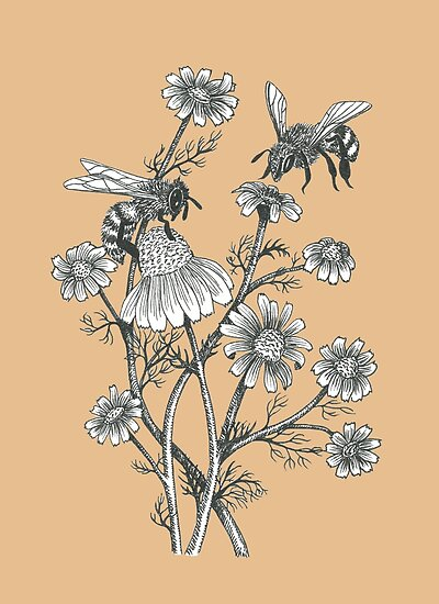 bees and chamomile on caramel background by EllenLambrichts