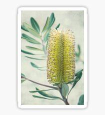Banksia Sticker