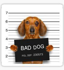 Funny Dachshund Mugshot  Sticker
